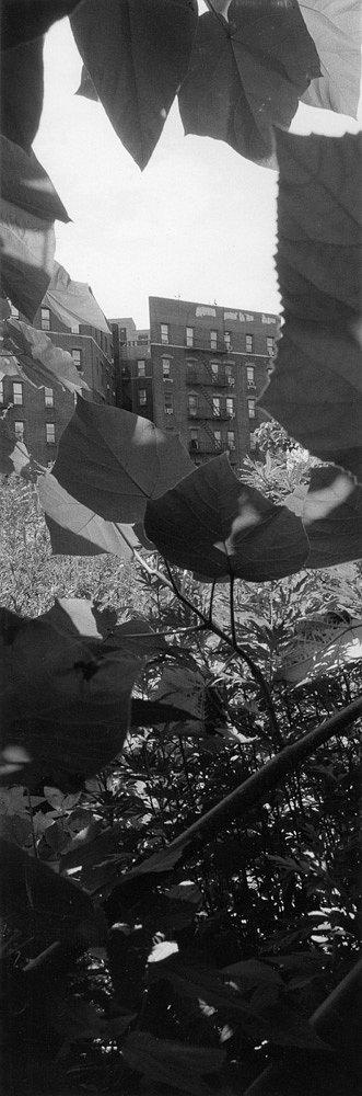 Santella-Dennis-Harlem-Gardens-404.jpg